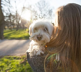 Veterinary Job Openings in Fort Mill: Dog outside with owner